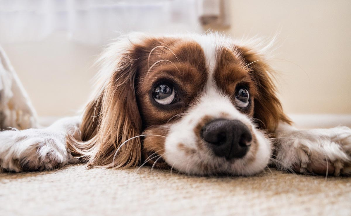 Should I get health insurance for my dog?