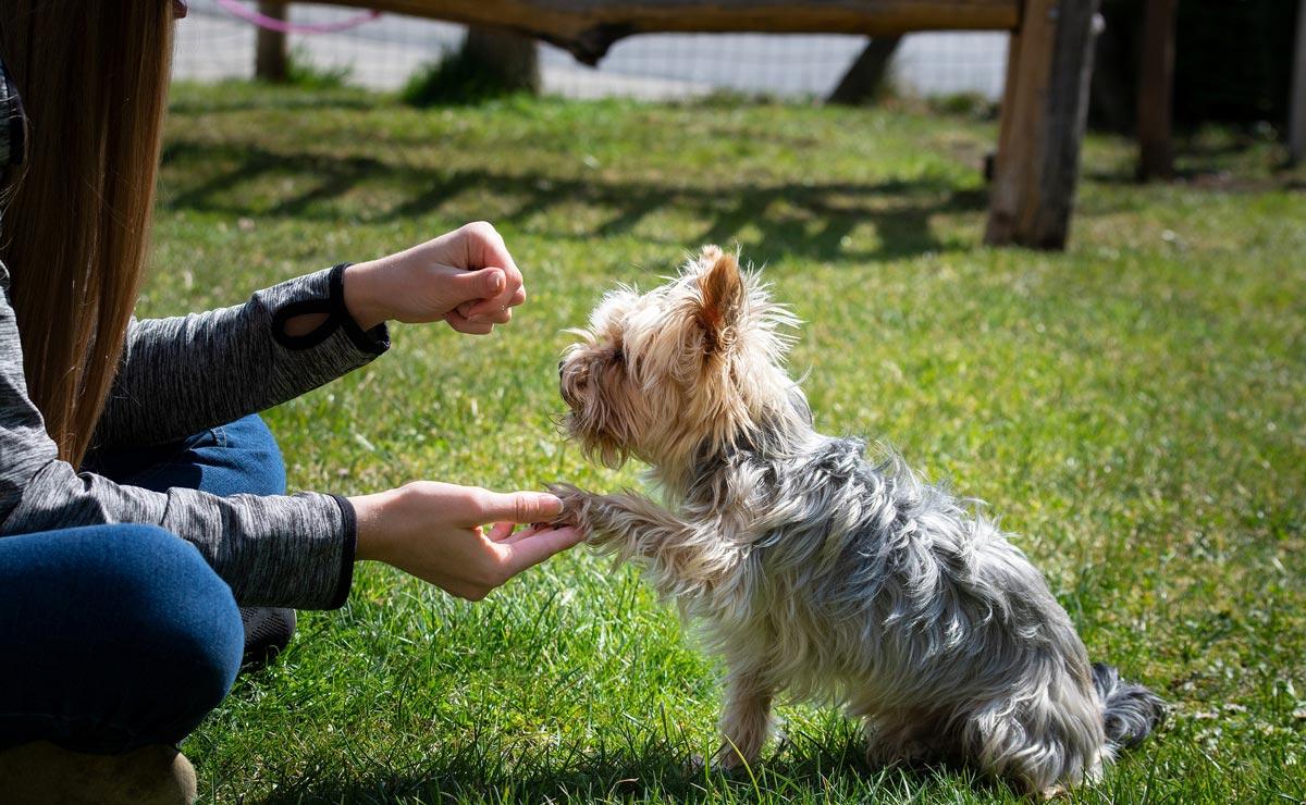 Dog Training: Essential but Fun